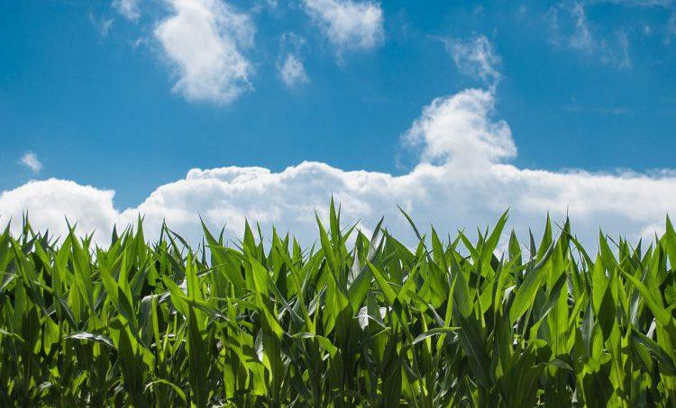 Gezondheid en wonen nabij landbouwpercelen