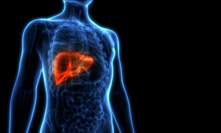 Glyfosaat en levertoxiciteit