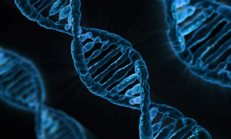Vet, epigenetica en cholesterol