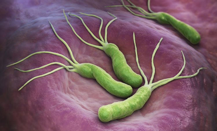 Helicobacter pylori en dysbiose