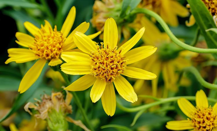 Meer gebruik van homeopathie bij integratieve oncologie