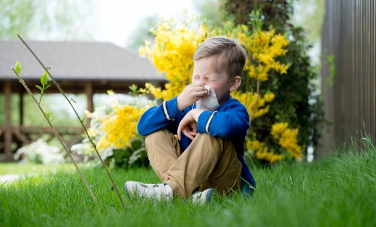 Preventief probiotica voor kinderen met hooikoorts