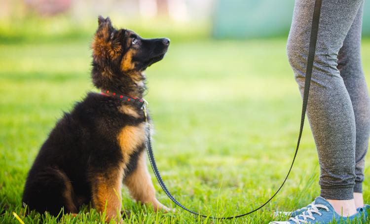 Hondentraining kan mentale gezondheid en welzijn ondersteunen